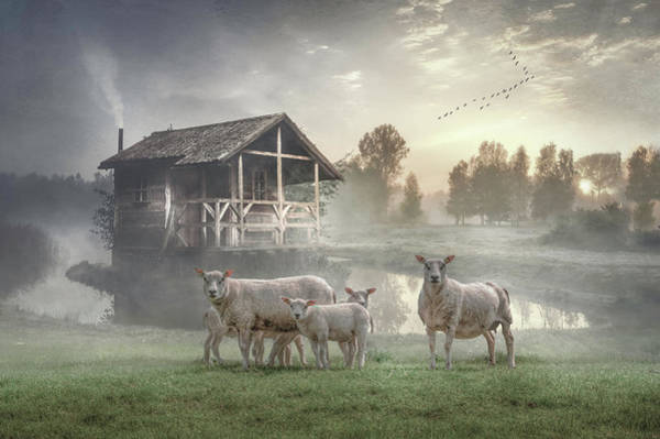 Wall Art - Photograph - Sunrise On The Farm In Soft Color by Debra and Dave Vanderlaan