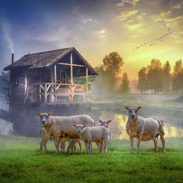 Photograph - Sunrise On The Farm In Square by Debra and Dave Vanderlaan