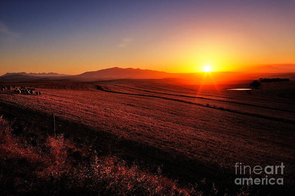 Harvest Wall Art - Photograph - Sunrise Over Cultivated Farmland Cape by Johan Swanepoel