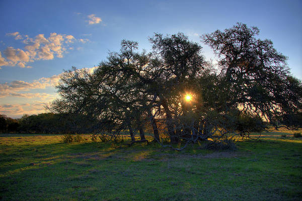 New Braunfels Photograph - Sunrise Over Oak Trees by Kelly Wade