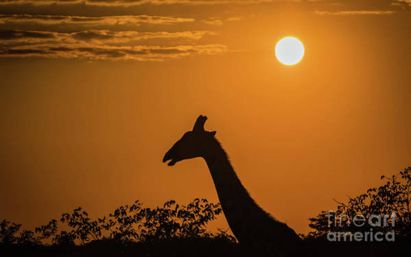 Photograph - Sunrise Over The Etosha National Park, Namibia by Lyl Dil Creations