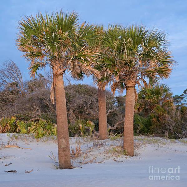 Photograph - Sunrise Palms by Patrick M Lynch