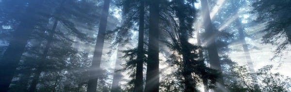 Wall Art - Photograph - Sunrise Redwood National Park Ca by Panoramic Images