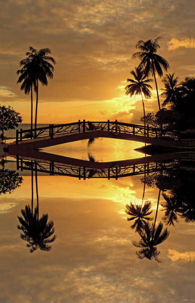 Phi Photograph - Sunrise Reflecting Palm Trees And A by Pete Reynolds