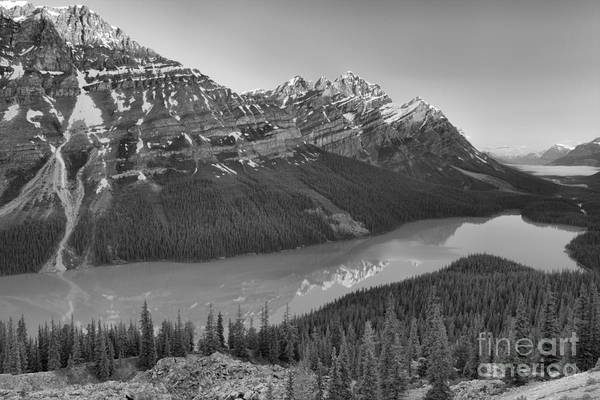 Photograph - Sunrise Reflections In Peyto Lake Black And White by Adam Jewell