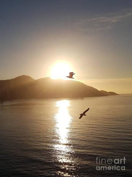 Wall Art - Photograph - Sunrise Seagull by Jeepee Aero