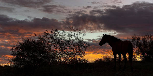 Heber Springs Photograph - Sunrise Stallion. by Paul Martin