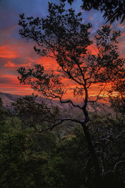 Wall Art - Photograph - Sunrise Tree by Vincent James
