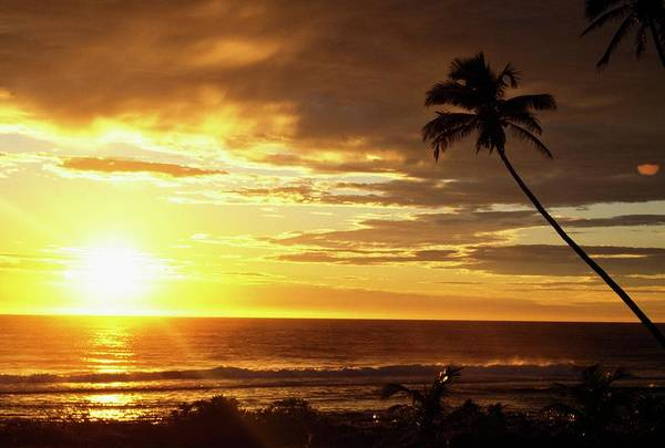 Rarotonga Photograph - Sunrise With Palm Trees by Design Pics/natural Selection Craig Tuttle
