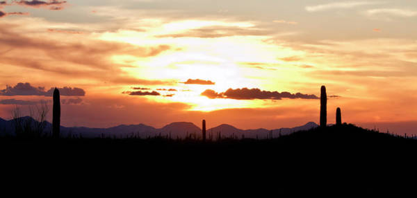 Photograph - Sunset And Cactus by Robert Woodward