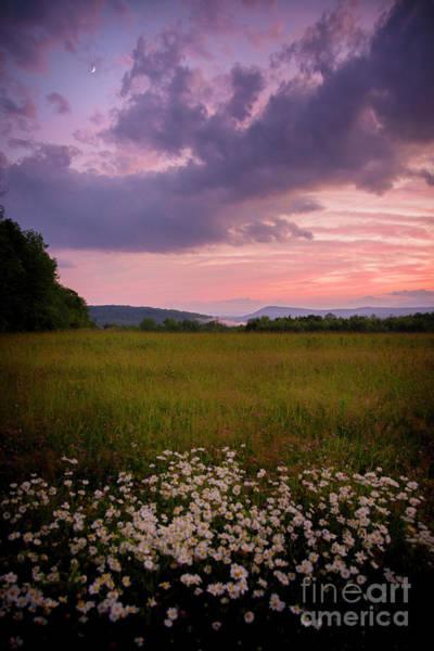 Photograph - Sunset And Daisy's  by Alana Ranney