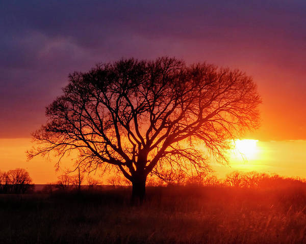 Photograph - Sunset And Tree Silhouette 01 by Rob Graham