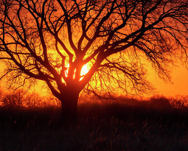 Photograph - Sunset And Tree Silhouette 02 by Rob Graham