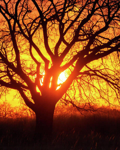 Photograph - Sunset And Tree Silhouette 03 by Rob Graham