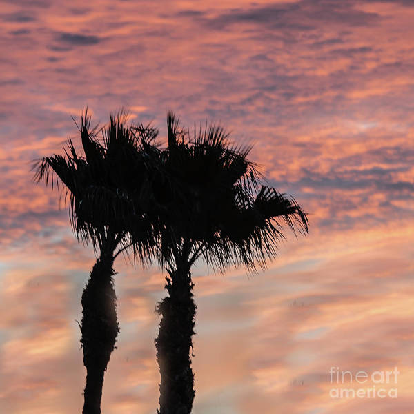 Wall Art - Photograph - Sunset And Twin Palm Trees by Robert Bales