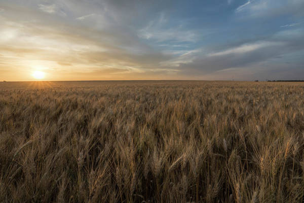 Photograph - Sunset And Wheat by Scott Bean