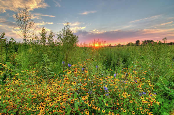 Photograph - Sunset And Wildflowers by Steve Stuller