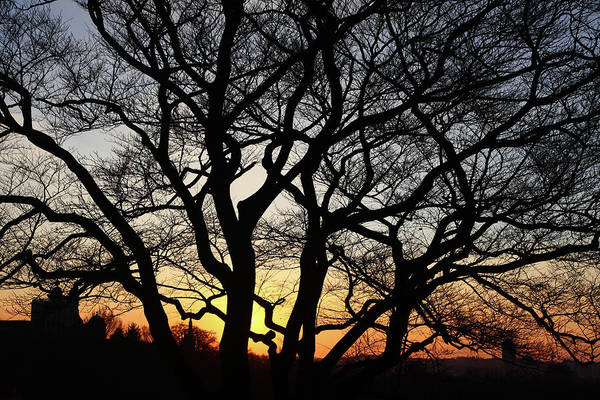 Photograph - Sunset At Greenwich Park, London by Aidan Moran