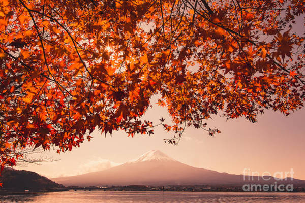 Wall Art - Photograph - Sunset At Mountain Fuji And Red Maple by Ommaphat Chotirat