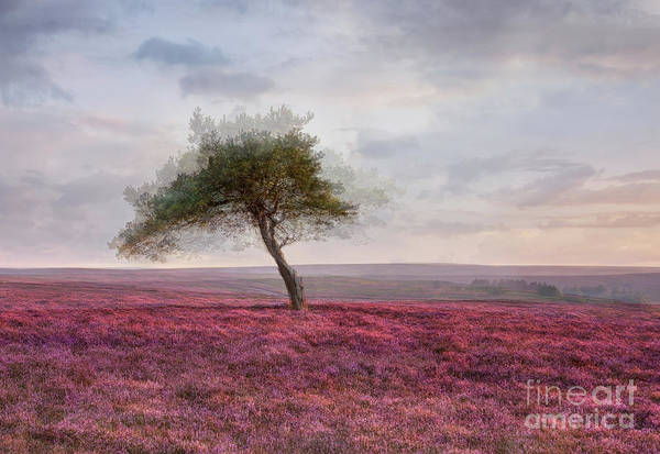 Wall Art - Photograph - Sunset At The Lone Tree by Janet Burdon