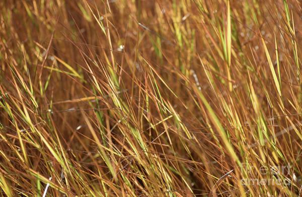 Photograph - Sunset Autumn Meadow Grasses by Rose De Dan
