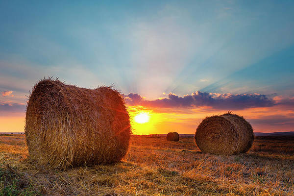 Photograph - Sunset Bales by Evgeni Dinev