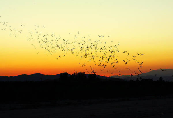Photograph - Sunset Flight by Anthony Jones