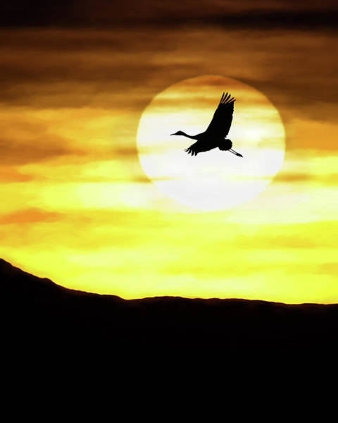 Photograph - Sunset Flyway by Scott Bourne