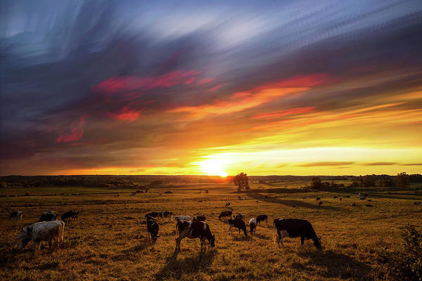 Wall Art - Photograph - Sunset Grazers by Matt Molloy
