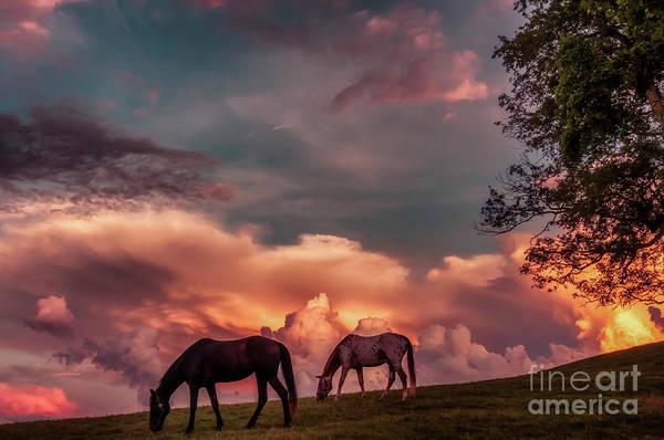 Photograph - Sunset Grazing Horses by Thomas R Fletcher