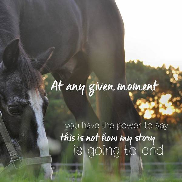 Photograph - Sunset Grazing Quote by Jamart Photography