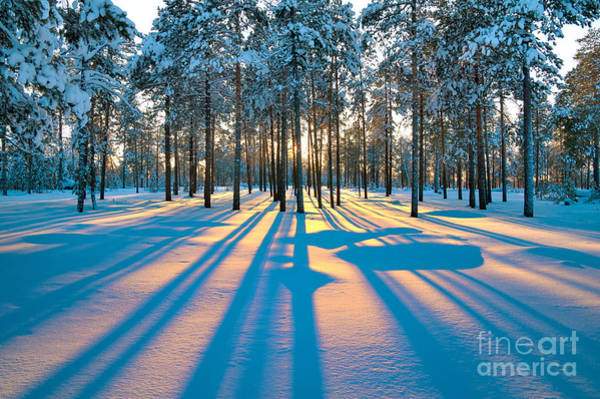 Beautiful Sunrise Photograph - Sunset In A Winter Forest by Leonid Ikan