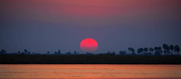 Photograph - Sunset In Botswana by John Rodrigues