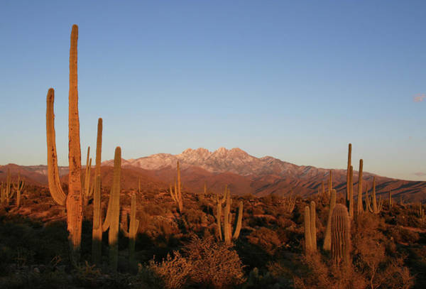 Sonoran Desert Photograph - Sunset In The Four Peaks Wilderness - by Jpschrage