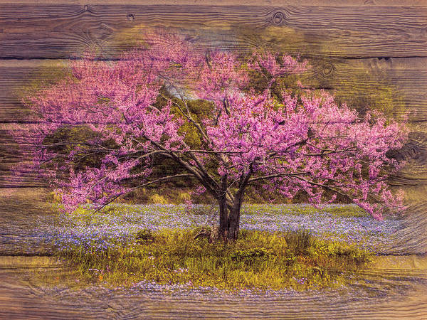 Wall Art - Photograph - Sunset Meadow by Debra and Dave Vanderlaan