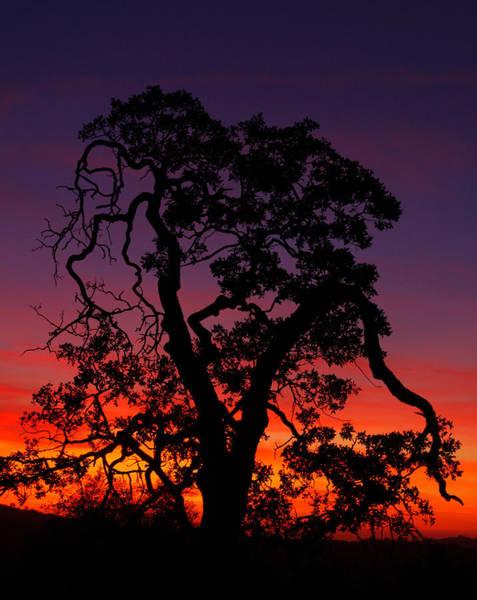 Wall Art - Photograph - Sunset Oak by Allan Erickson