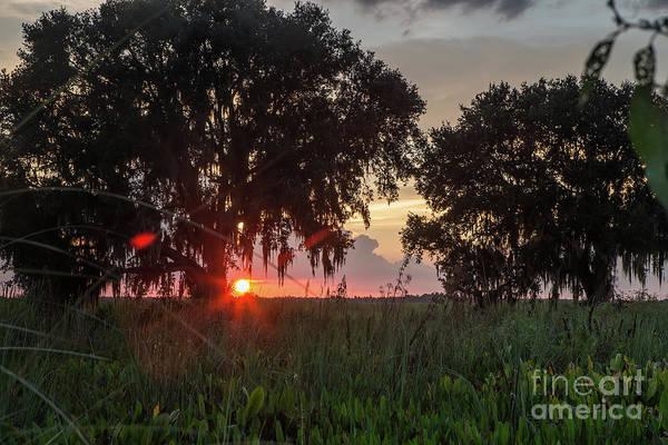 Wall Art - Photograph - Sunset Oaks by Rick Mann