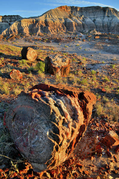 Photograph - Sunset On Petrified Forest Np's Jasper Forest by Ray Mathis