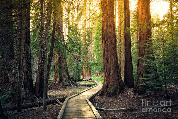 Hiking Path Photograph - Sunset On The Forest Path, Sequoia by Stephen Moehle