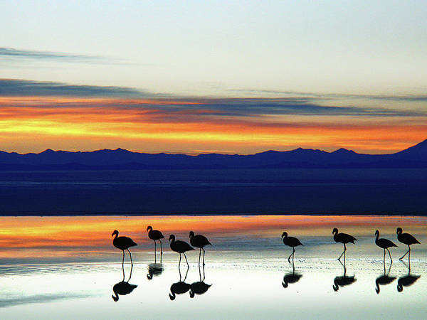 Sunset On The Uyuni Salt Desert, Bolivia Art Print