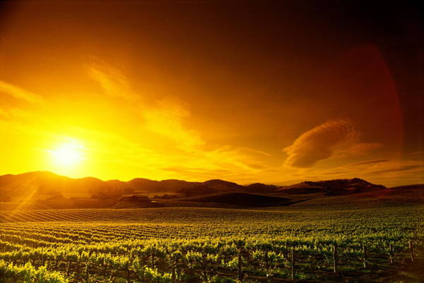 Napa Valley Photograph - Sunset On Vineyards Napa Valley by Stephen Simpson