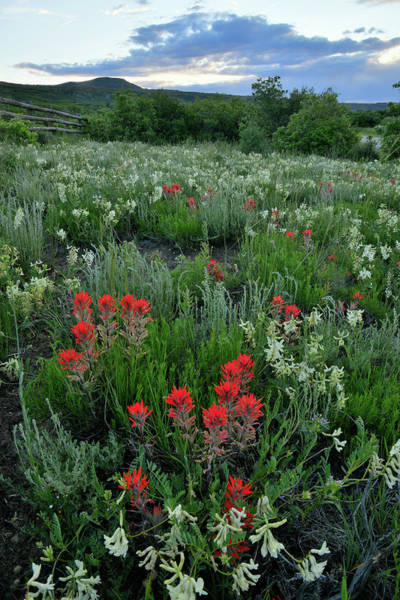 Photograph - Sunset On Wildflowers Near Dallas Divide by Ray Mathis