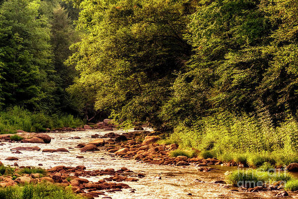 Photograph - Sunset On Williams River by Thomas R Fletcher
