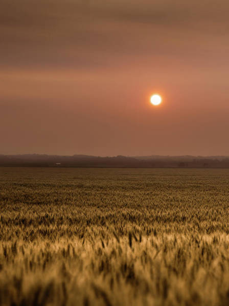 Nebraska Photograph - Sunset Over A Wheat Field 2 by Jake Olson Studios Blair Nebraska