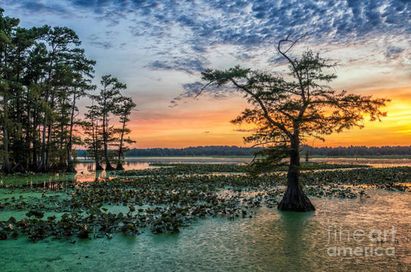 Landmark Wall Art - Photograph - Sunset Over Bald Cypress From Grassy by Anthony Heflin
