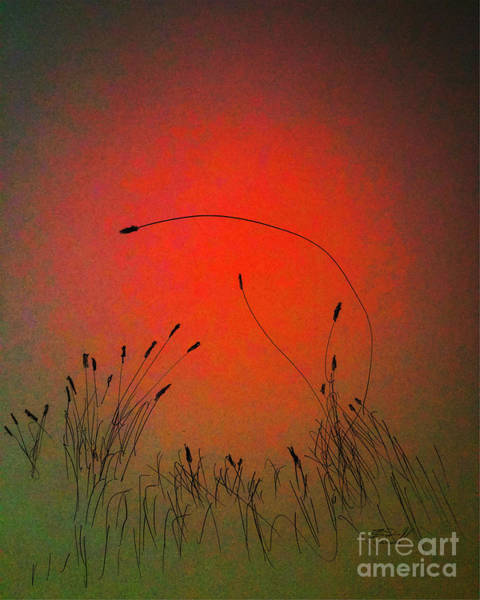 Digital Art - Sunset Over Cattails by Rob Mandell