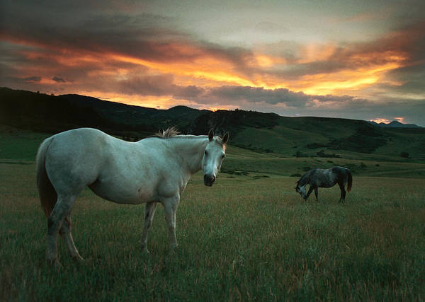 Douglas County Wall Art - Photograph - Sunset Over Horses And Hills, Colorado by Milehightraveler