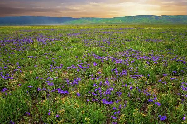 Photograph - Sunset Over Purple Lacy Phacelia At Carrizo Plain - Superbloom 2017 by Lynn Bauer