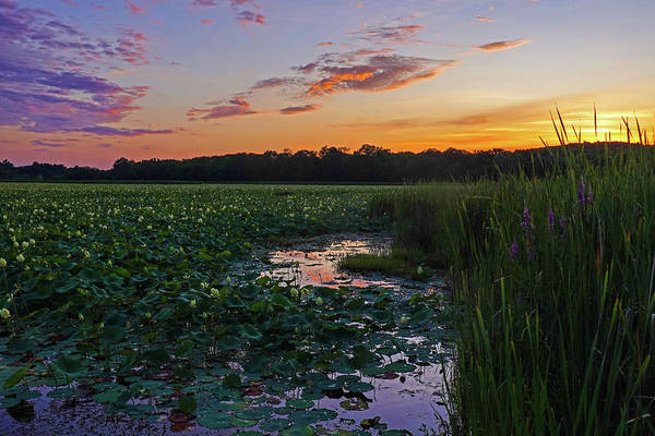 Photograph - Sunset Over The Great Meadows In Concord Ma Lotus Bloom by Toby McGuire