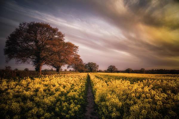 Wall Art - Photograph - Sunset Over The Rapeseed Field by Chris Fletcher